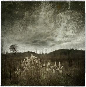 Etowah Field, Diane Kirland
