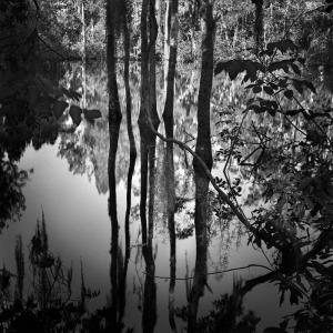 3 Sisters Spring, Crystal Springs, FL by Benjamin Dimmitt