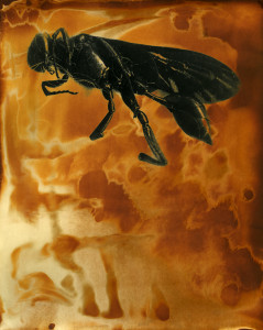 Wasp   © Angela Franks Wells