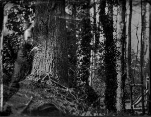 Hidden Seeker © Mary Anne Mitchell