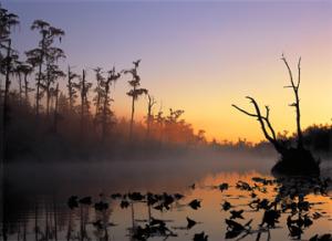 Okefenokee © Diane Kirkland 2015 Grand Prize National Wetlands Award