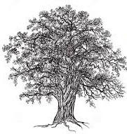 chestnut oak clipart2
