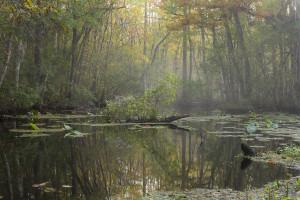 Morning Mist © Doug Eng