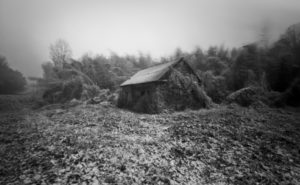 Wintertime Kudzu© David Wharton